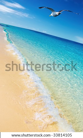 Tropical beach and flying seagull - stock photo