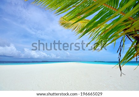 Tropical beach and palm leaves - stock photo