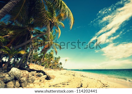 Tropical beach and palm trees - stock photo