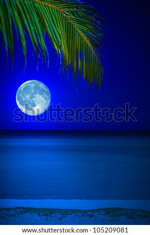 Tropical beach at night with a full moon reflecting on the water and a coconut palm on the foreground - stock photo