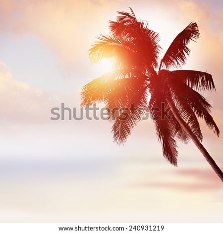 Tropical beach background at sunset. Palm tree silhouette - stock photo