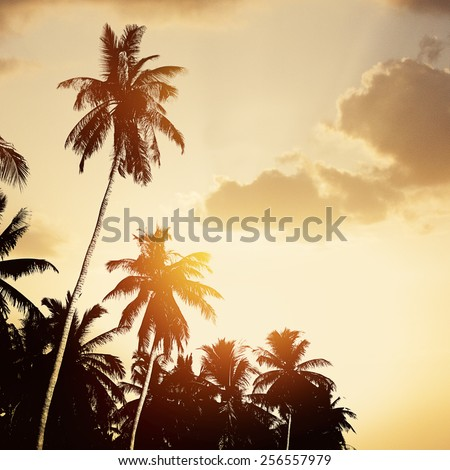 Tropical beach background with coconut palm tree silhouettes at sunset. - stock photo