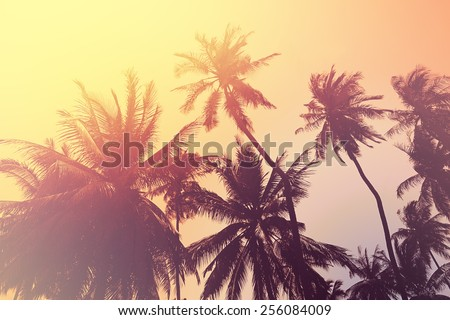 Tropical beach background with palm tree silhouettes at sunset - stock photo