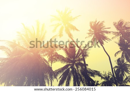 Tropical beach background with palm tree silhouettes at sunset. Vintage effect. - stock photo