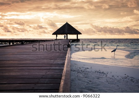 tropical beach: flamingo at the dawn. Man in the background - stock photo