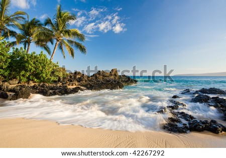 tropical beach in makena cove with palm tree and waves in south maui, hawaii - stock photo
