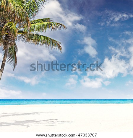 Tropical beach in Miami Florida with palm trees blue sky, white sand and clean waters of Atlantic Ocean - stock photo