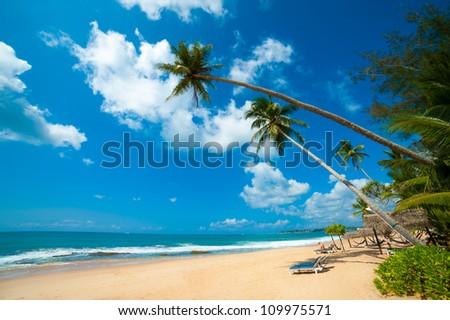 Tropical beach in Sri Lanka. Man reading book sitting on the desk chair. - stock photo