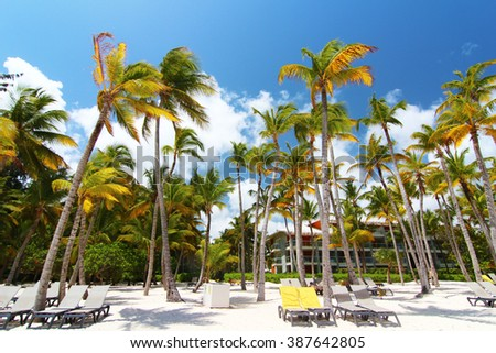 Tropical beach near tourist resort with palm trees - stock photo