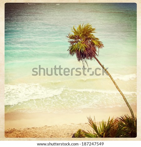 Tropical beach palm, instagram style - stock photo