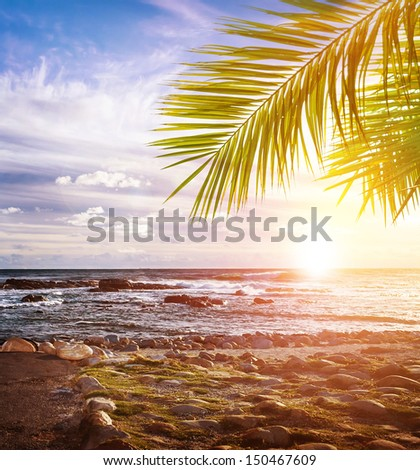 Tropical beach,South Africa, stony coastline, beautiful landscape, exotic nature, summer vacation, travel and tourism concept