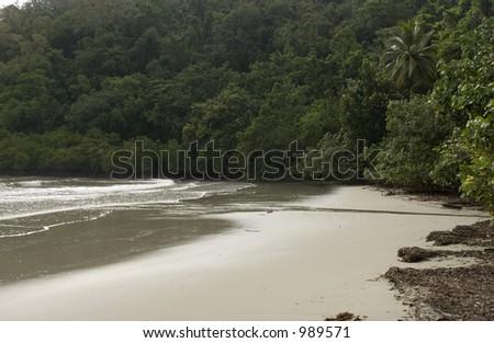 Tropical beach whit mangrove trees in Australia - stock photo