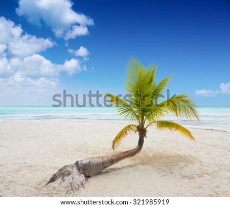 Tropical beach with a palm tree on Saona Island in Dominican Republic - stock photo