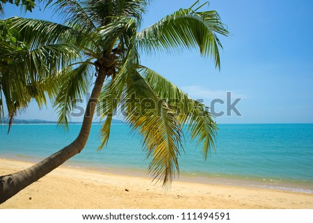 Tropical beach with coconut palm, Ko Samui, Thailand