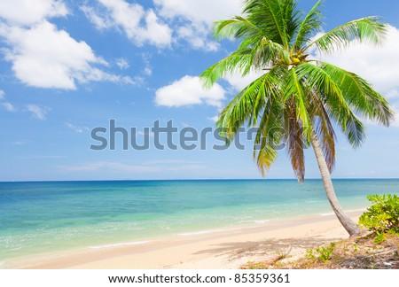 tropical beach with coconut palm. Koh Lanta, Thailand - stock photo
