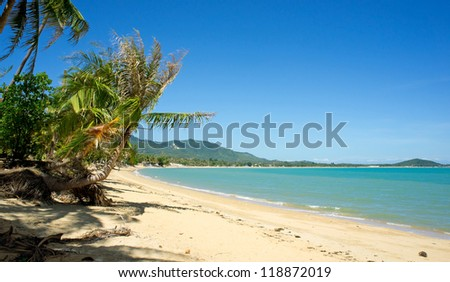 Tropical beach with coconut palm, Koh Samui, Thailand - stock photo