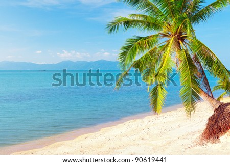 tropical beach with coconut palm. Koh Samui, Thailand