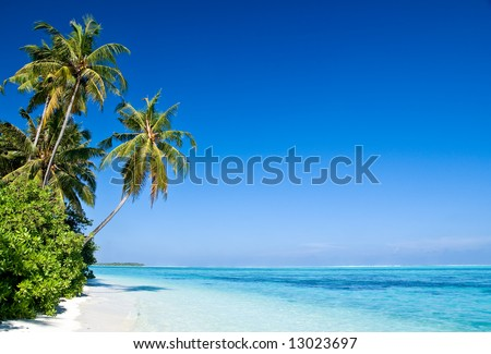 Tropical Beach with coconut palm trees