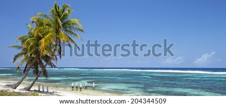 Tropical beach with coconut palm trees, morning blue sky and turquoise waters - panoramic view  - stock photo