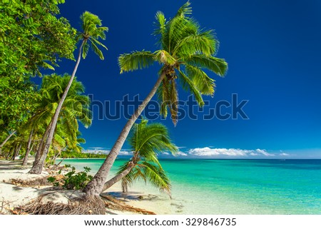 Tropical beach with coconut palm trees on Fiji Islands - stock photo