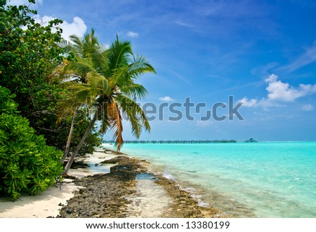 Tropical Beach with coconut palm trees on the maldives