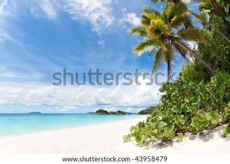 tropical beach with coconut palm trees white sand and turquoise blue ocean waters
