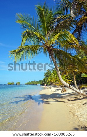 Tropical beach with coconut tree leaning over the sea, Caribbean sea