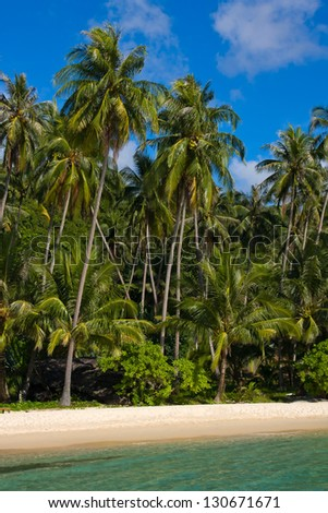 Tropical beach with exotic palm trees on the sand. - stock photo