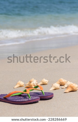 Tropical beach with flip flops and conch shells close up  - stock photo