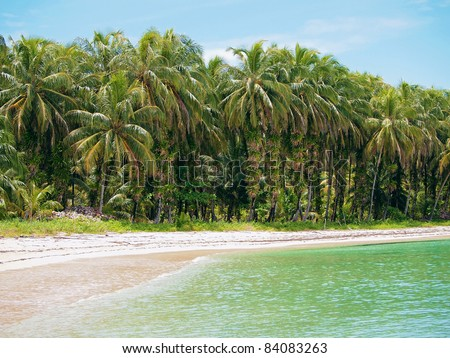 Tropical beach with lush coconut palm trees and epiphytes on their trunk, Zapatillas Islands, Bocas del Toro, Caribbean sea, Panama - stock photo