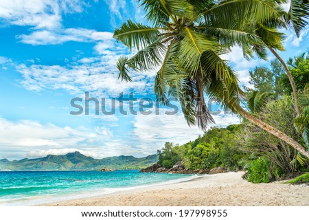 tropical beach with palm and turquoise sea - stock photo