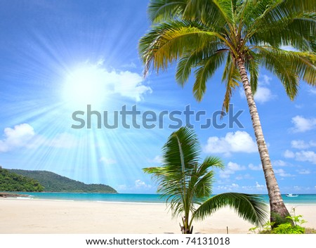 Tropical beach with palm trees near blue sea. Exotic summer vacation. - stock photo