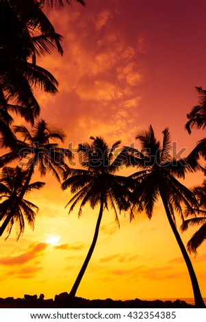 Tropical beach with palm trees silhouettes at vivid warm sunset time