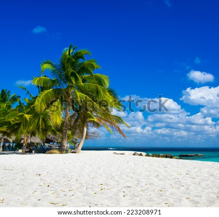 Tropical beach with sea wave on the sand and palm trees - stock photo