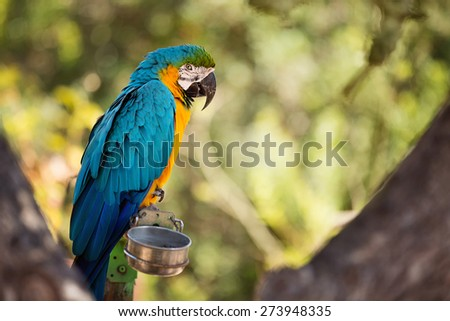 Tropical blue and gold macaw parrot from South America - stock photo
