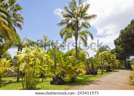 Tropical Botanical Garden in Funchal city, Madeira island, Portugal - stock photo