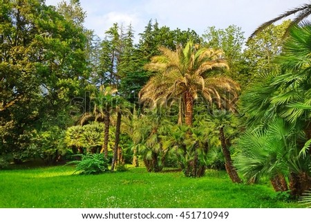Tropical Botanical Garden Or Forest Or Park Landscape  In Summertime, Russia, Sochi
