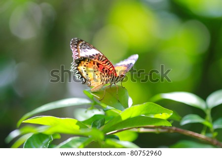 Tropical butterfly in the jungle forest - stock photo