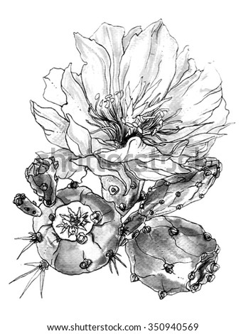 Tropical cactus flower in blossom. Botanical hand drawn watercolor black and white monochrome illustration for greeting cards, invitations, and other printing projects. - stock photo