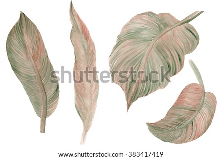 tropical Canna lily Leaves  plant botanic watercolor painting on white background - stock photo