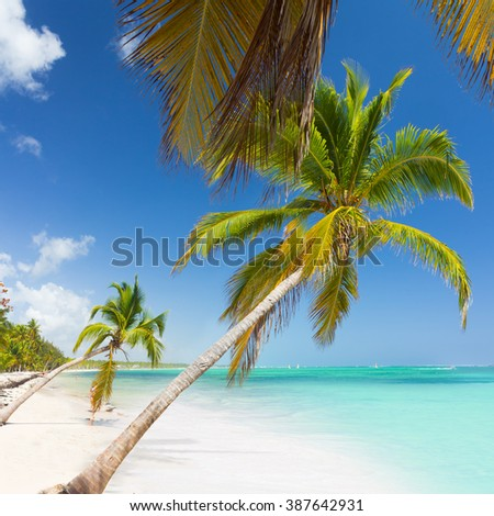 Tropical caribbean wild nature scenery near the beach in Punta Cana - stock photo