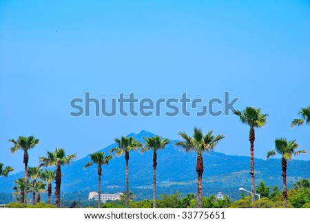 Tropical coconut trees with majestic mountain in the background
