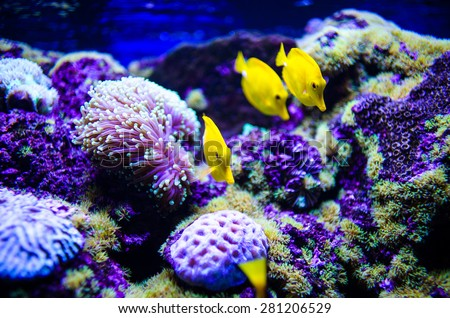 tropical colorful sea fish. Underwater photo with great variety of fish and coral. - stock photo