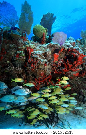Tropical coral reef and fish in the coastal waters of the caribbean sea  - stock photo