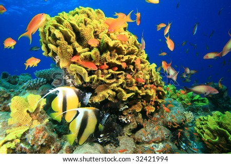 Tropical Coral Reef and Fishes - stock photo