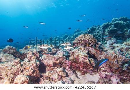 Tropical coral reef and fishes, Layang Layang. - stock photo