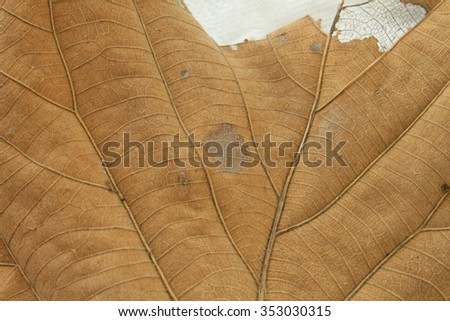 Tropical dry leaves close-up