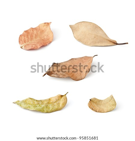 Tropical dry leaves set isolated on white. - stock photo