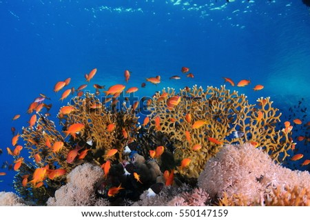 Tropical Fish and colorful Coral Reef