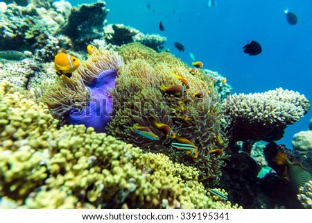 Tropical fish and coral in Maldives